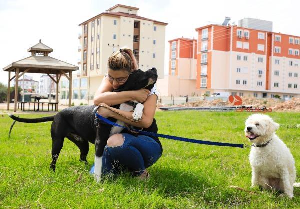 2019/10/ruhsati-olmayan-pitbull-beslemesin-52bbc6716d96-1.jpg