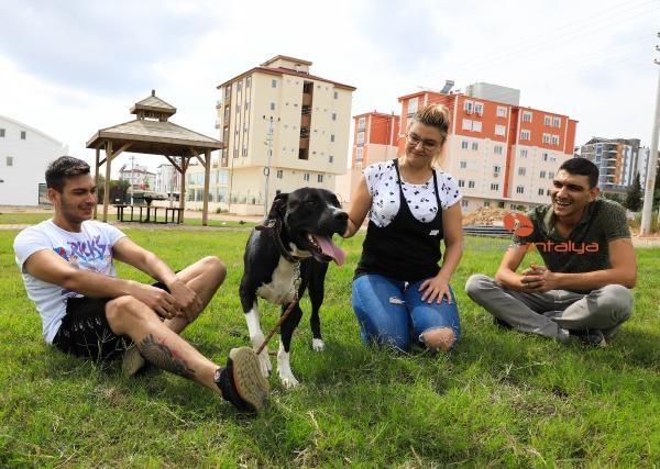 2019/10/ruhsati-olmayan-pitbull-beslemesin-52bbc6716d96-4.jpg