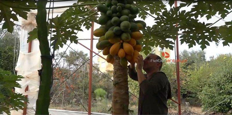 2019/11/okudugu-yalniz-ada-filmlerinde-etkilenip-papaya-uretimine-basladi-20191114AW85-2.jpg