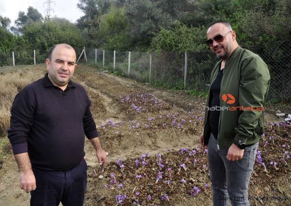 2019/12/antalyada-safran-ve-salep-bitkisi-yetistirildi-568f2f97188e-1.jpg