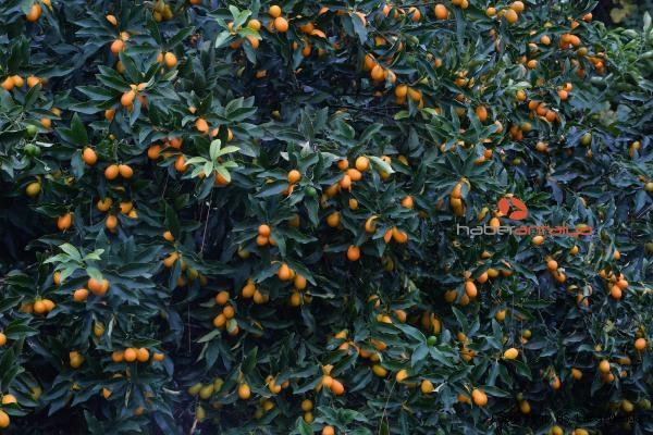 2019/12/turuncgillerin-atasi-kamkatin-kilosu-20-lira-92081f17a18d-1.jpg