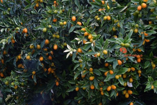 2019/12/turuncgillerin-atasi-kamkatin-kilosu-20-lira-92081f17a18d-2.jpg