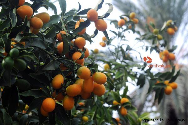 2019/12/turuncgillerin-atasi-kamkatin-kilosu-20-lira-92081f17a18d-3.jpg