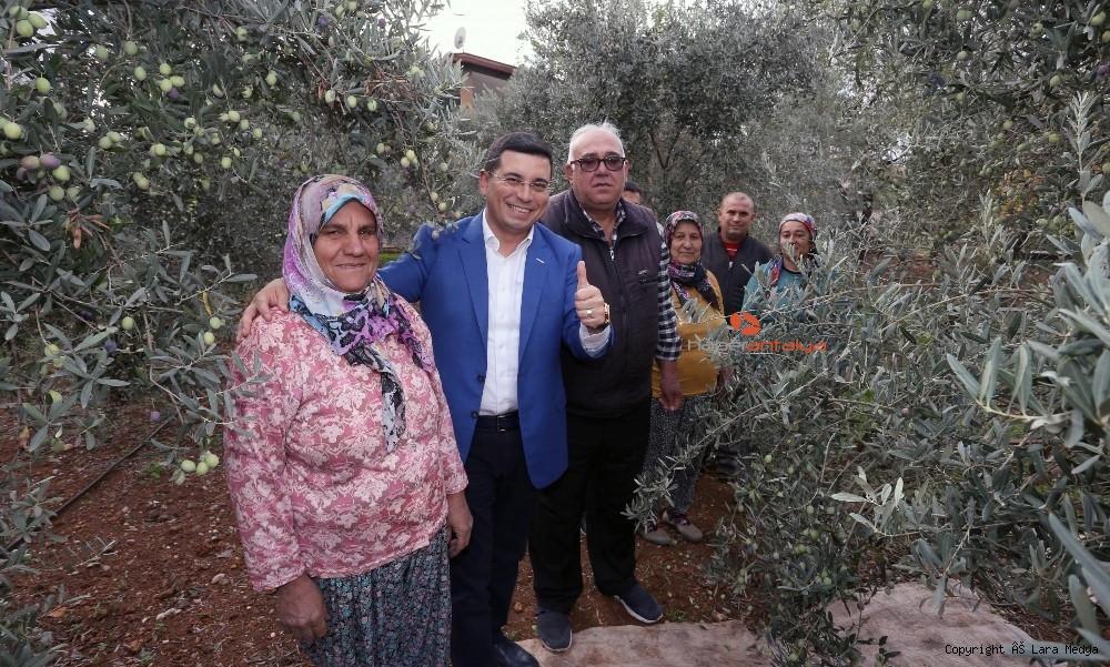 2019/12/tutuncuden-zeytin-hasati-20191202AW87-4.jpg