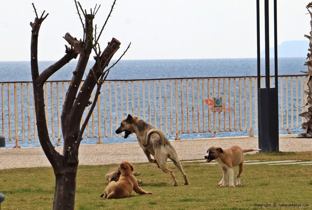 2020/03/dunyaca-unlu-sahil-onlara-kaldi-20200330AW97-1.jpg