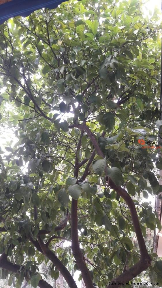 2020/05/domates-boncuk-portakal-ve-karpuz-da-col-sicaklarinin-kurbani-oldu-20200528AW02-3.jpg