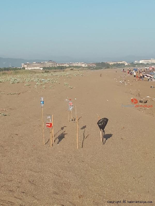 2020/06/sahildeki-deniz-kaplumbagasi-yuvalarinin-uzerinden-traktorle-gectiler-a7e94ca4de2c-5.jpg