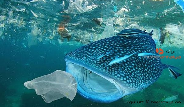 2020/07/tek-kullanimlik-plastikler-yasaklansin-kampanyasina-dev-destek-97cd0f4d9733-3.jpg