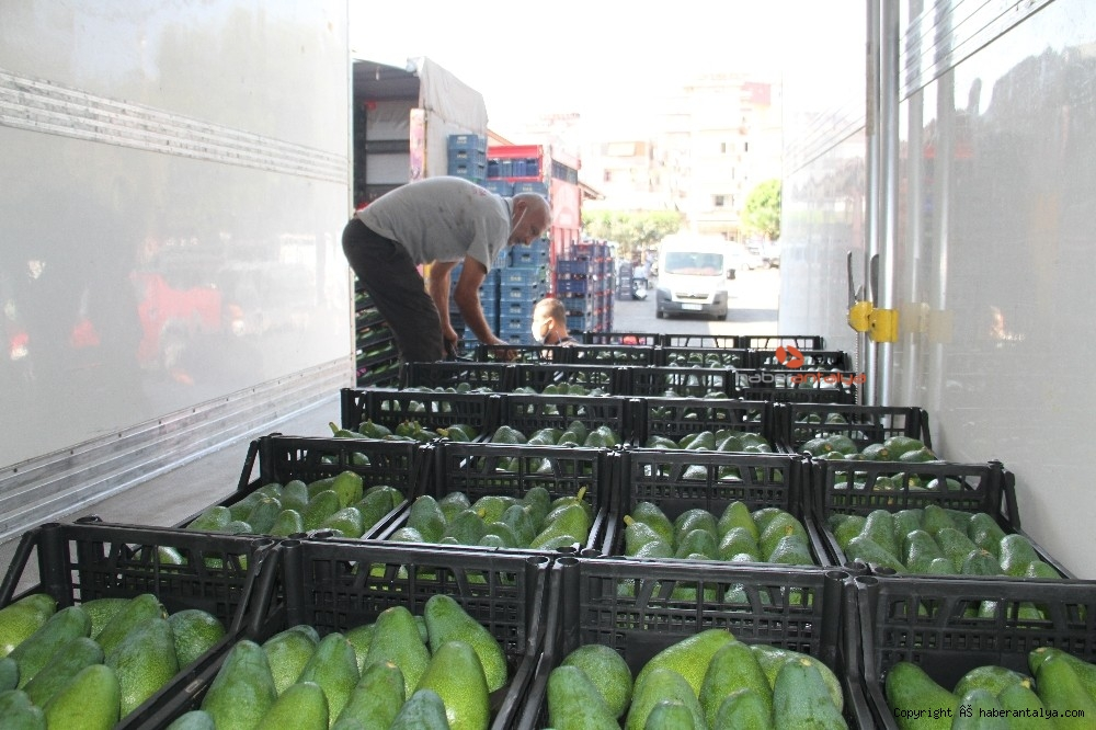 2020/09/alanyadan-bulgaristana-3-ton-avokado-ihracati-20200917AW11-2.jpg