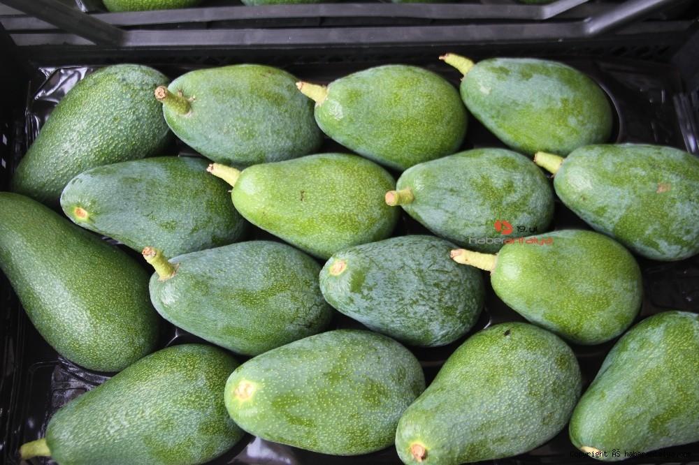 2020/09/alanyadan-bulgaristana-3-ton-avokado-ihracati-20200917AW11-4.jpg