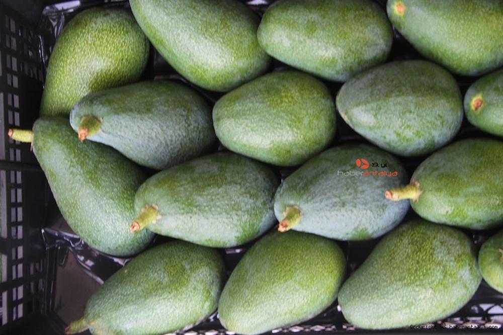 2020/09/alanyadan-bulgaristana-3-ton-avokado-ihracati-20200917AW11-8.jpg