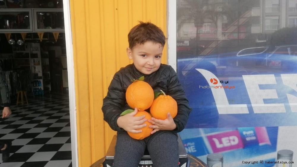 2021/01/tanesi-1-kilogrami-gecen-portakallar-ne-kadara-satiliyor--20210113AW21-2.jpg