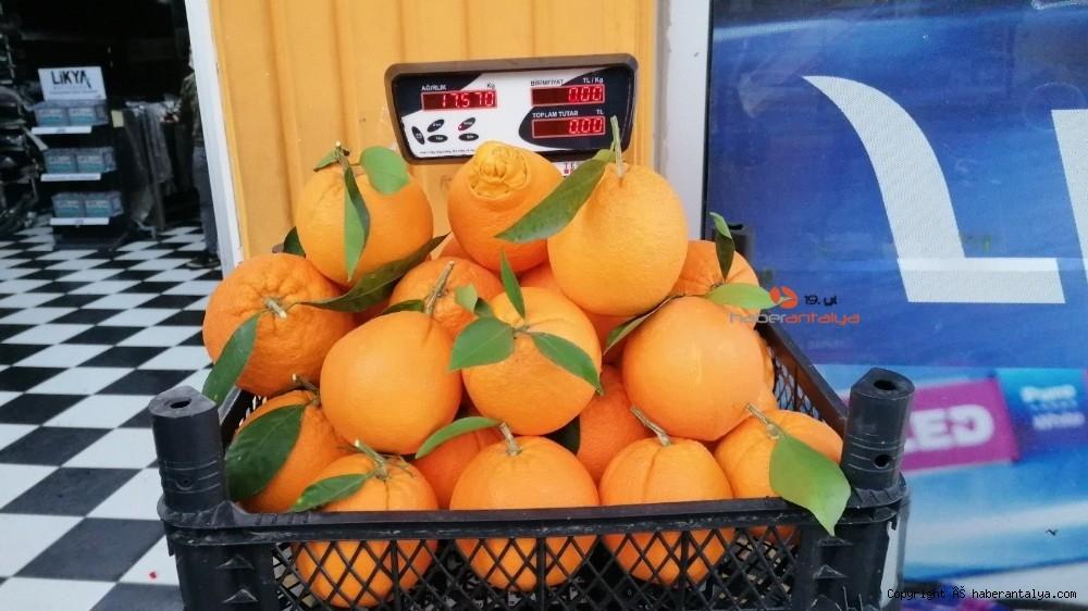 2021/01/tanesi-1-kilogrami-gecen-portakallar-ne-kadara-satiliyor--20210113AW21-6.jpg