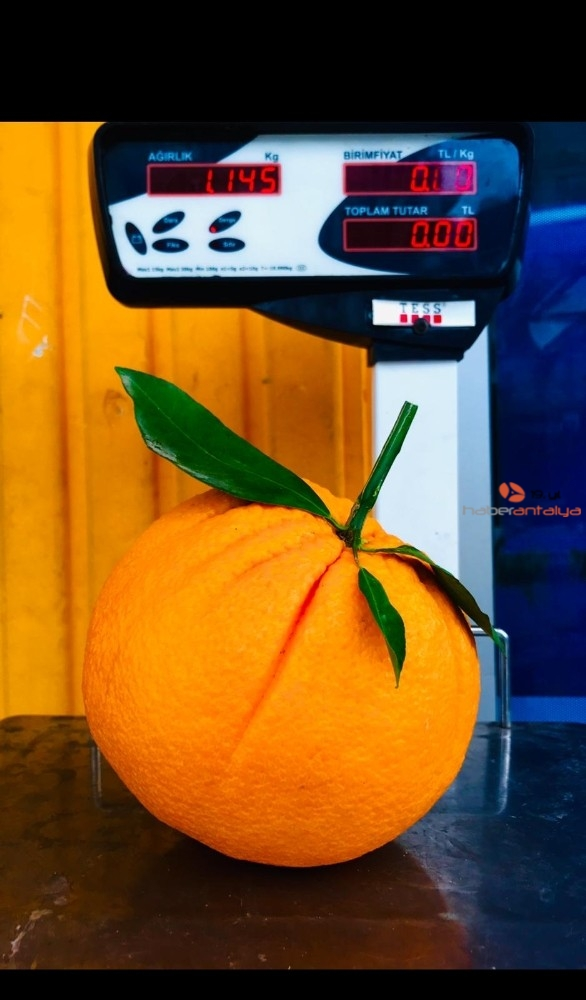 2021/01/tanesi-1-kilogrami-gecen-portakallar-ne-kadara-satiliyor--20210113AW21-7.jpg