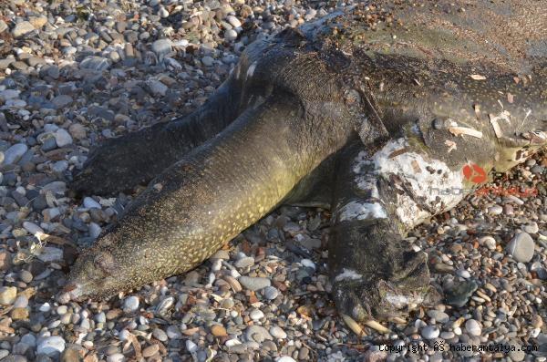 2021/03/sahile-vurdu-gorenler-sasti-kaldi--011273ebff87-2.jpg