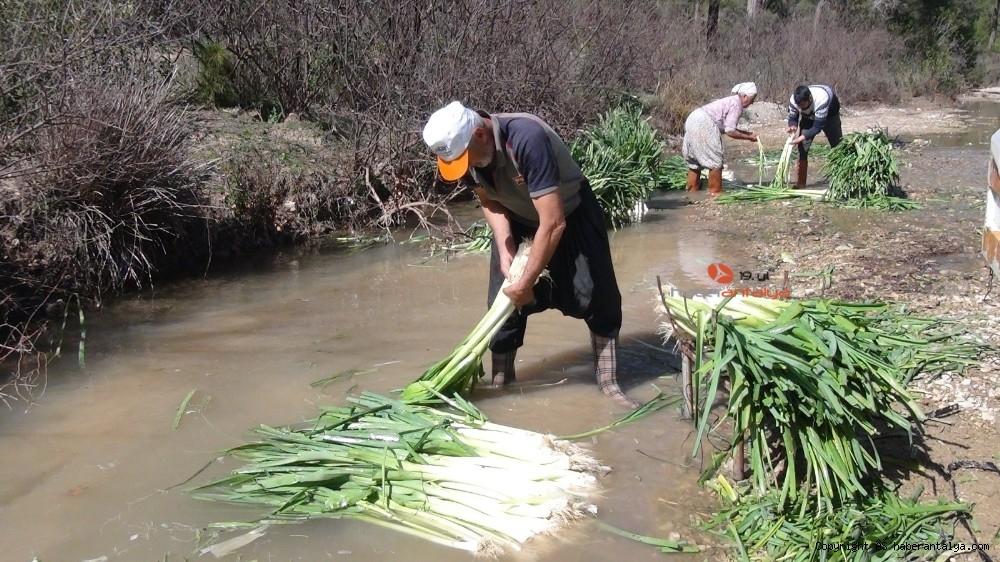 2021/03/turkiyenin-kislik-sebze-uretim-merkezlerinden-antalyada-hasat-devam-ediyor-20210301AW25-1.jpg