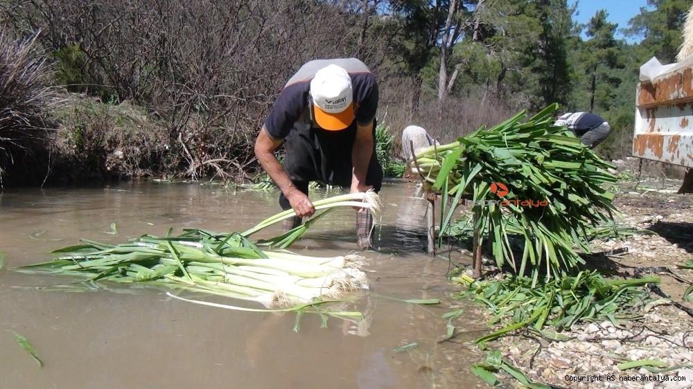 2021/03/turkiyenin-kislik-sebze-uretim-merkezlerinden-antalyada-hasat-devam-ediyor-20210301AW25-2.jpg