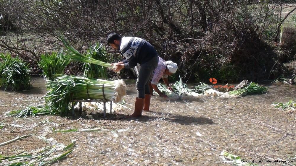 2021/03/turkiyenin-kislik-sebze-uretim-merkezlerinden-antalyada-hasat-devam-ediyor-20210301AW25-3.jpg