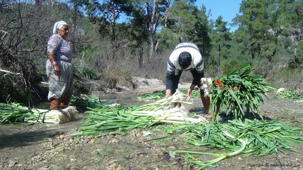 2021/03/turkiyenin-kislik-sebze-uretim-merkezlerinden-antalyada-hasat-devam-ediyor-20210301AW25-4.jpg