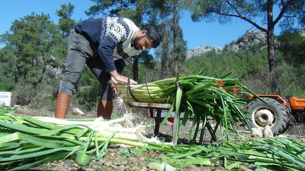 2021/03/turkiyenin-kislik-sebze-uretim-merkezlerinden-antalyada-hasat-devam-ediyor-20210301AW25-5.jpg