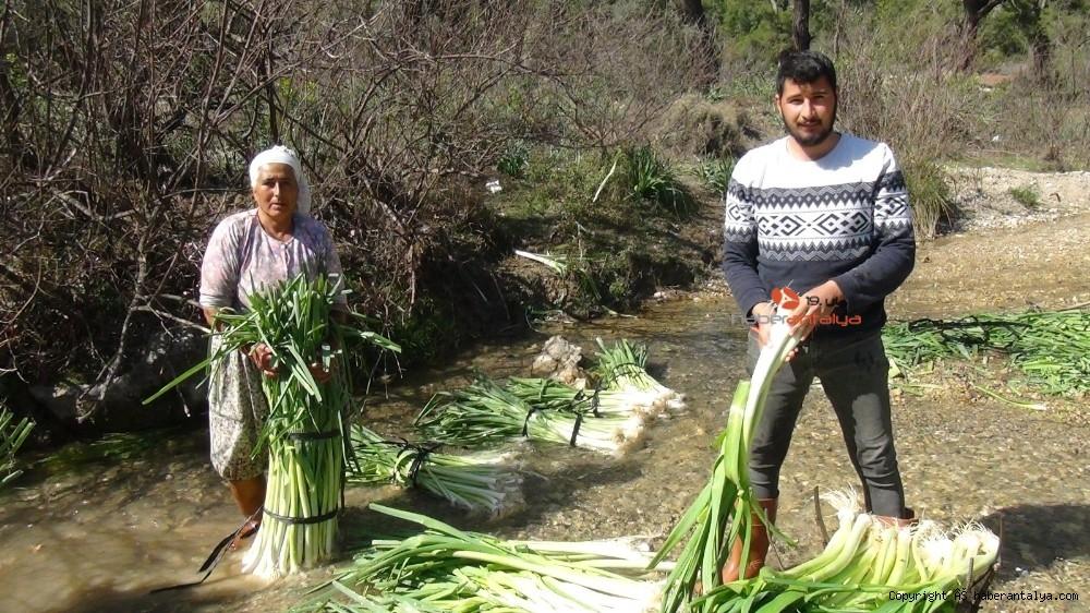 2021/03/turkiyenin-kislik-sebze-uretim-merkezlerinden-antalyada-hasat-devam-ediyor-20210301AW25-6.jpg