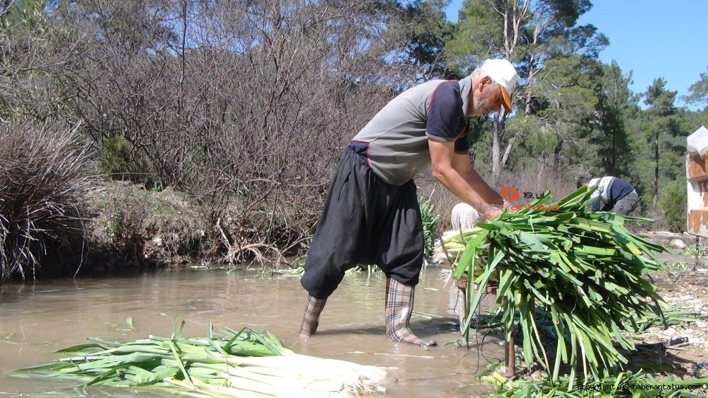 2021/03/turkiyenin-kislik-sebze-uretim-merkezlerinden-antalyada-hasat-devam-ediyor-20210301AW25-7.jpg
