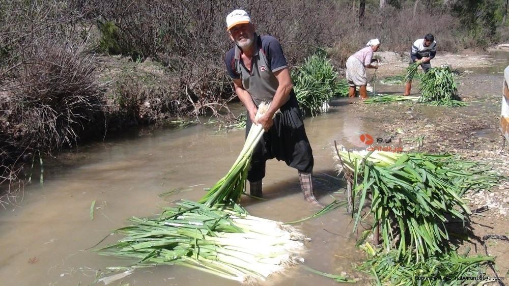 2021/03/turkiyenin-kislik-sebze-uretim-merkezlerinden-antalyada-hasat-devam-ediyor-20210301AW25-8.jpg
