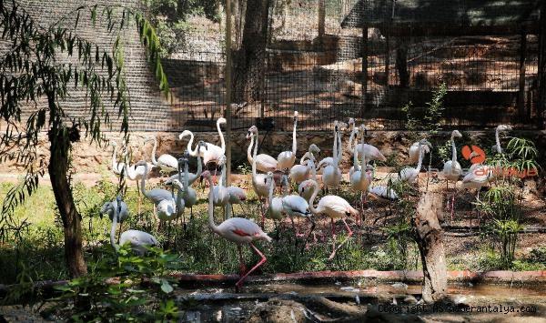 2021/07/hayvanat-bahcesinin-misafirleri-flamingolar-4457d420d98d-3.jpg