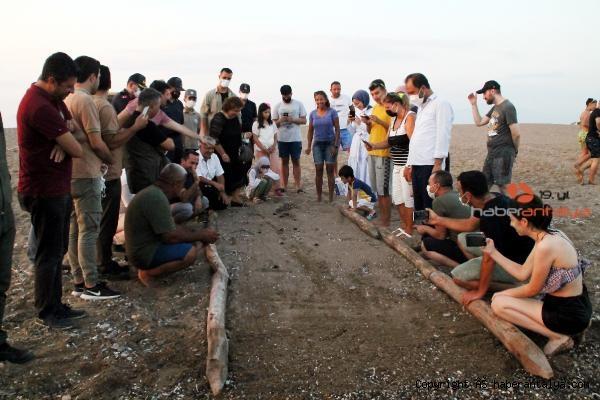 2021/07/manavgat-sahilindeki-ilk-caretta-caretta-yavrulari-denize-ulasti-cd164044ea68-1.jpg