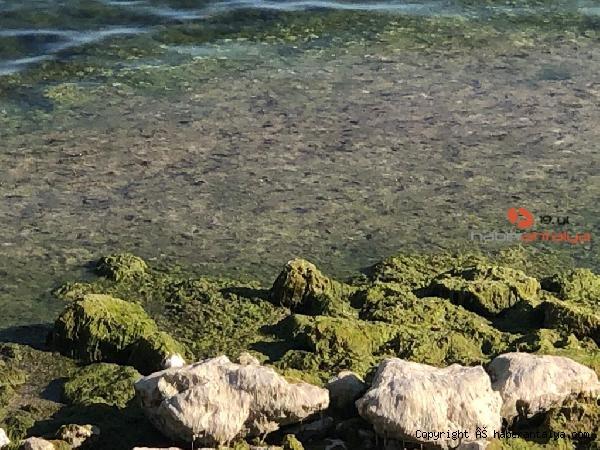 2021/08/beysehir-golunde-alg-patlamasi-suyun-rengi-yesile-dondu-d5e43e986a9d-1.jpg