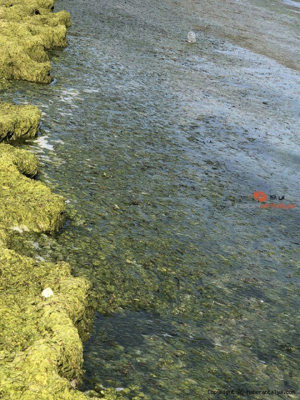 2021/08/beysehir-golunde-alg-patlamasi-suyun-rengi-yesile-dondu-d5e43e986a9d-4.jpg