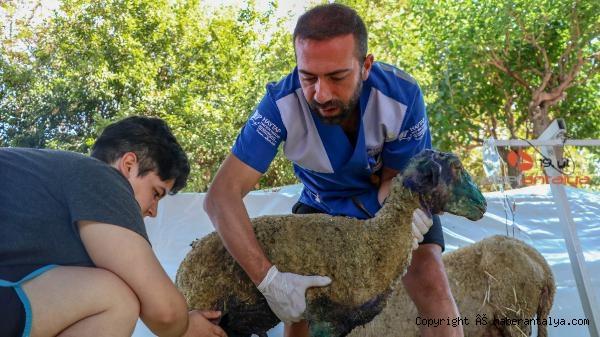 2021/08/turkiyede-bir-ilk-hayvanlar-icin-kuruldu--b4fce1a9f5d1-5.jpg