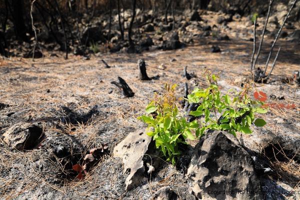 2021/08/yanan-orman-kullerinden-doguyor-7-bitki-turu-filizlendi-cbf026793944-2.jpg