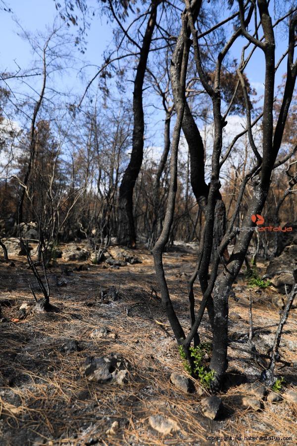 2021/08/yanan-orman-kullerinden-doguyor-7-bitki-turu-filizlendi-cbf026793944-3.jpg