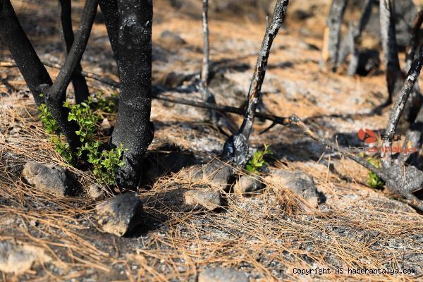 2021/08/yanan-orman-kullerinden-doguyor-7-bitki-turu-filizlendi-cbf026793944-4.jpg