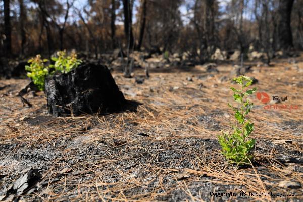 2021/08/yanan-orman-kullerinden-doguyor-7-bitki-turu-filizlendi-cbf026793944-5.jpg