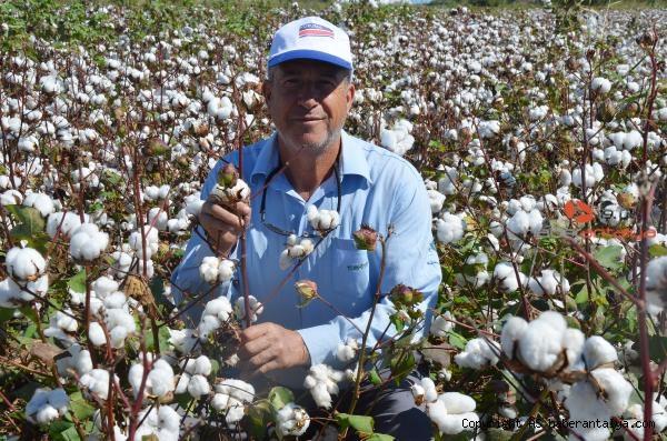 2021/09/beyaz-altin-pamukta-hasat-basladi-bakin-fiyati-ne-kadar--ba452b8d3850-2.jpg