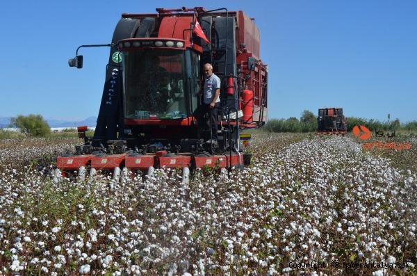 2021/09/beyaz-altin-pamukta-hasat-basladi-bakin-fiyati-ne-kadar--ba452b8d3850-4.jpg