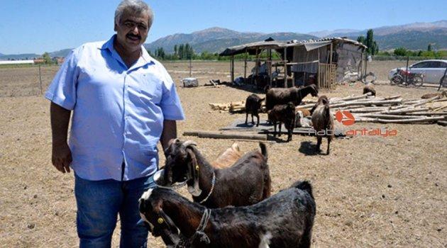 18 futbolcusunu satıp 10 keçi aldı