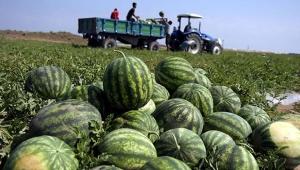 Antalya'da karpuz üretimi kaç ton?