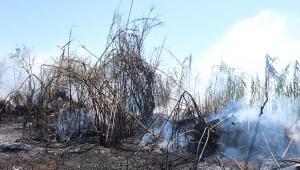 Antalya'da ot çalı yangını