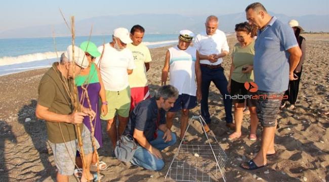 Gönüllü çevreciler caretta nöbetine başladı