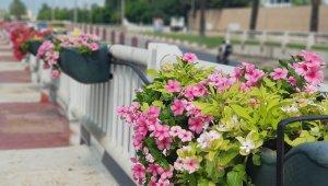 Antalya çiçeklerle donatıldı