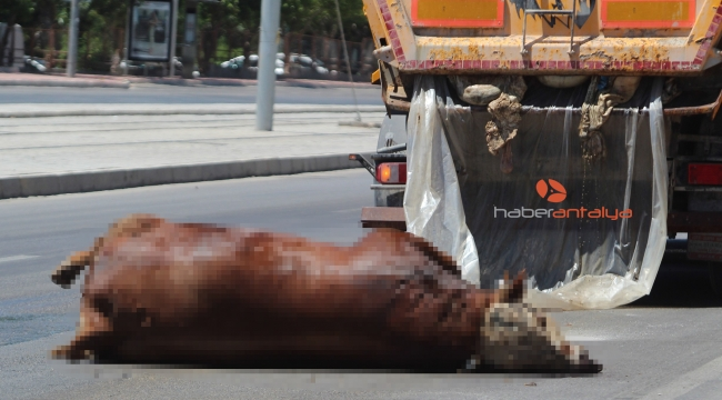 Caddeye dökülen boğa leşi ve kurban atıkları zor anlar yaşattı
