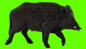Çiftçilerden yaban domuzu sürek avı