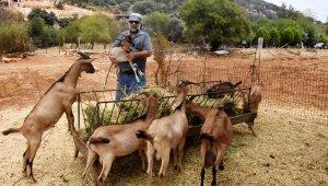 Doğadaki çiftleşmedenyeni keçi ırkı