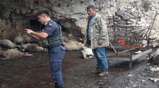 Antalya'da yıldırım düşmesi sonucu 60 küçükbaş hayvan telef oldu