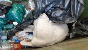 Antik kentin maskotu 'Dost', ölü bulundu