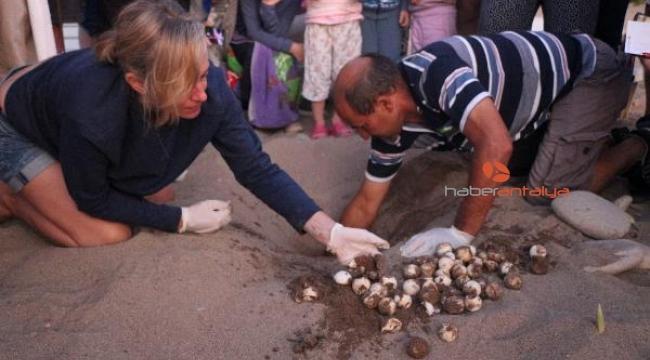 Çıralı'da 3 bin 640 yavru caretta caretta denizle buluştu