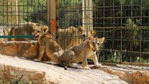 Hayvanat bahçesinde 12 yıl sonra yavru sevinci